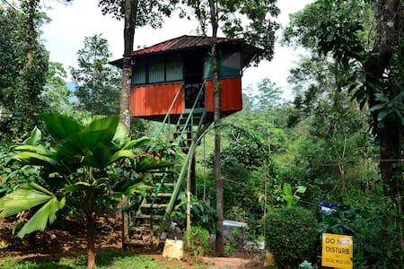 Forest Tree top watch tower