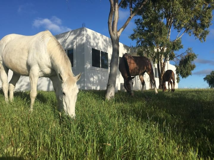 Secluded Private Ranch with 2 horses, nature walks