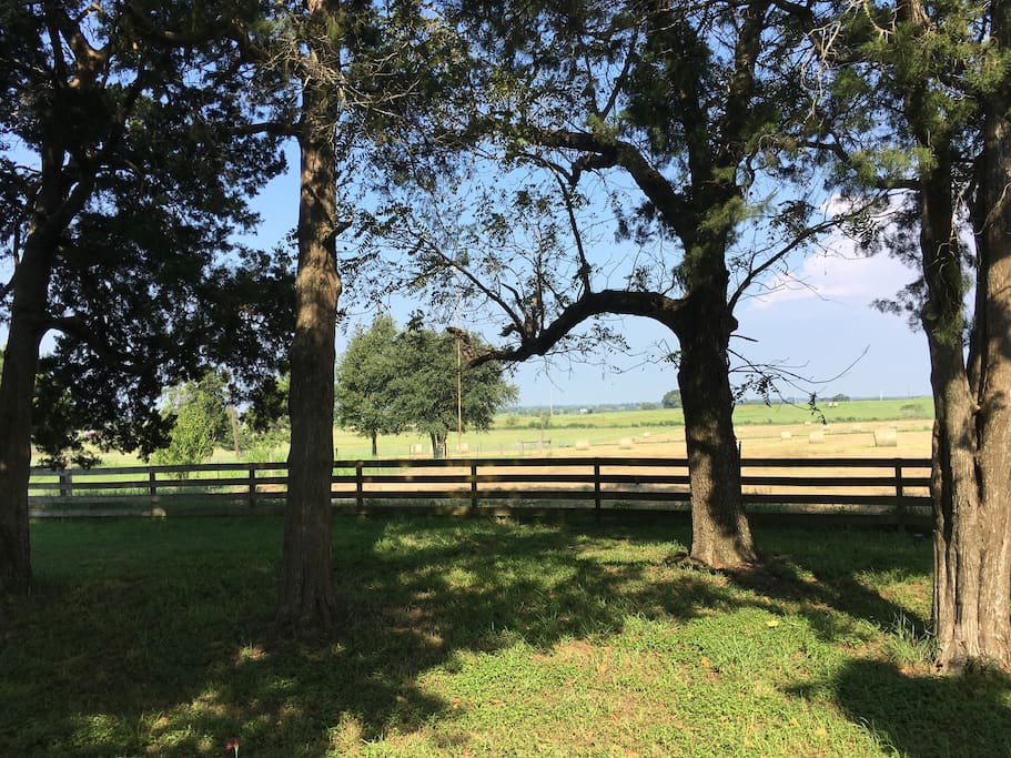 Black Walnut Ranch is 100 acres of peace, quiet, and beautiful views. These are the trees for which it's named.