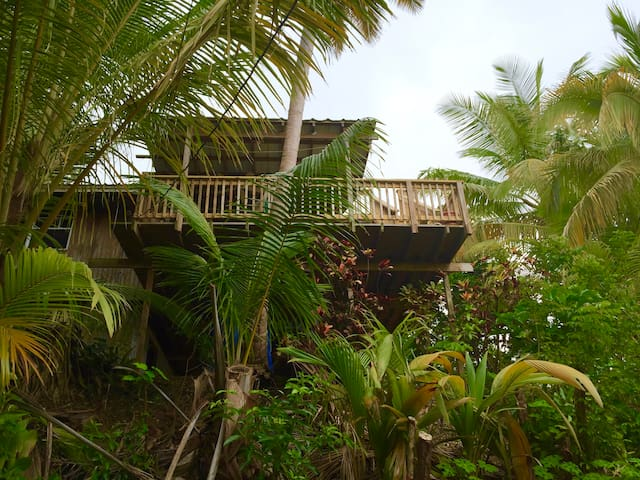 Coconut Cottage Tree House. Ocean Views by Beaches