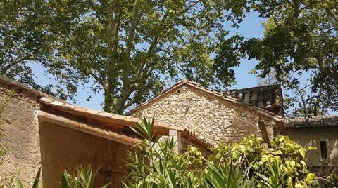 Belle Maison provençale au milieu des platanes