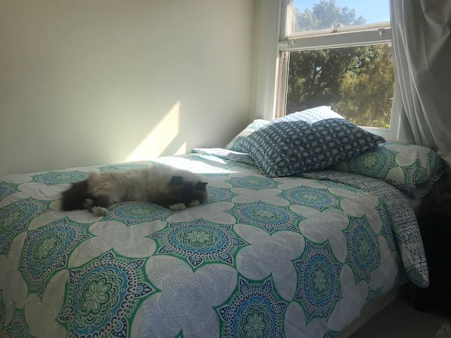 Your bed, with the cat's comfort seal of approval