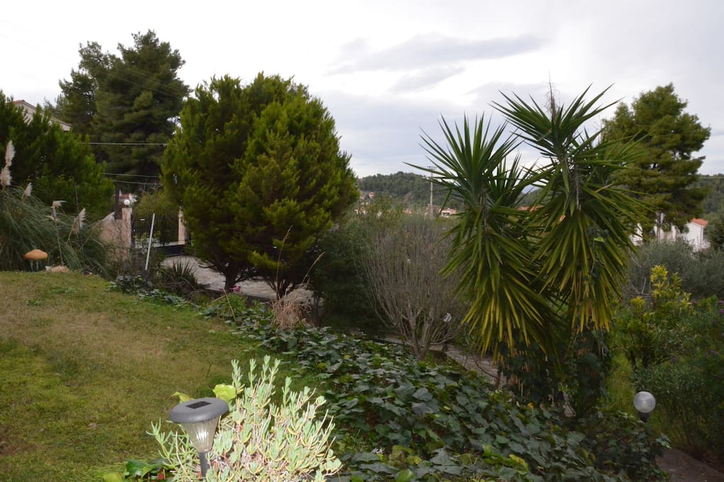 View to the garden.