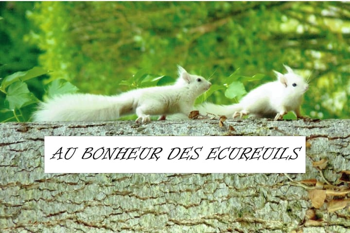 Au Bonheur Des Ecureuils
