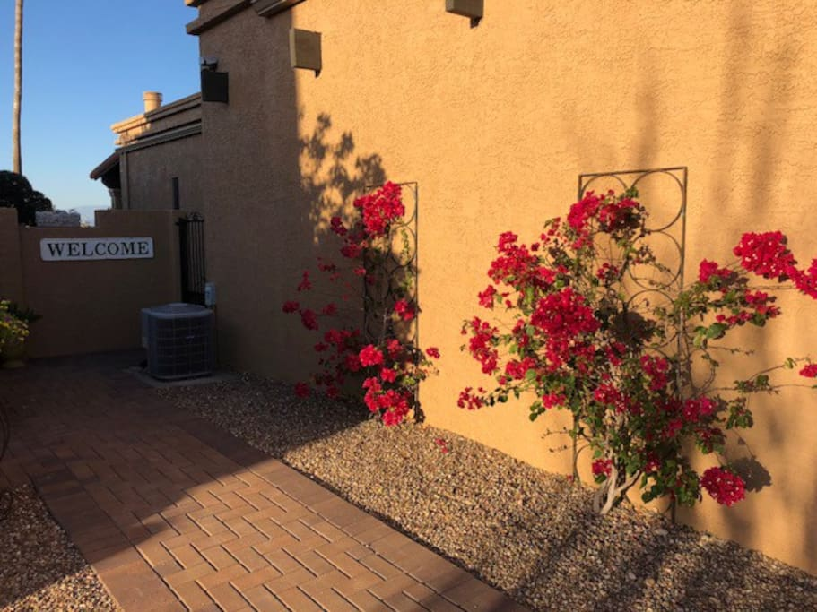 Bougainvillea lining paver walkway