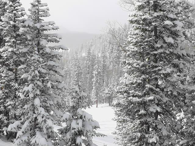 Ski in - Ski Out Condo Right by the Main Lodge!!!