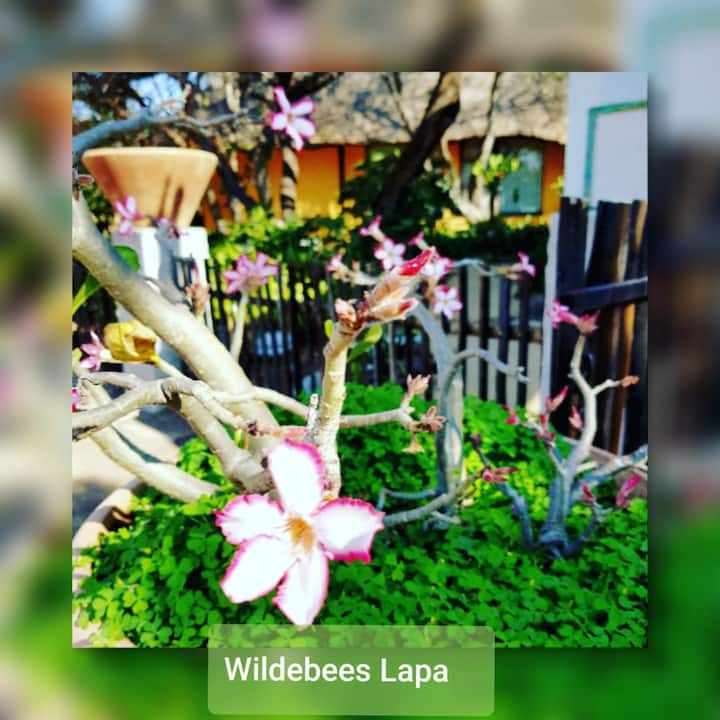 Wildebees Lapa Garden cottage,close to Kruger Park