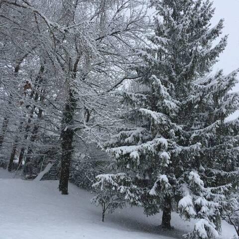Le bois en hiver