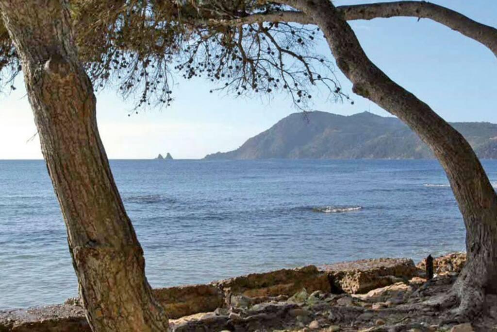 """vue sur """"les deux frères"""" et le """"cap Sicié"""" depuis la pinède de la plage Sainte Asile"""