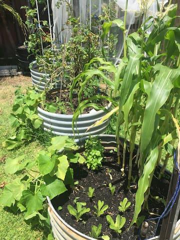 Veggie patch pick n' eat
