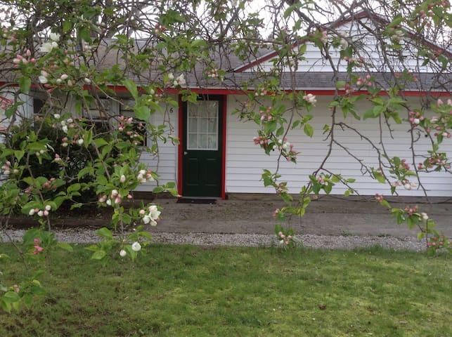Little Gem - Douglas  - Houten huisje