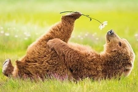 Spirit Bear Ranch - Conifer