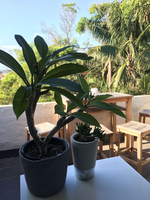 Frangipani and succulent enjoying the morning sun