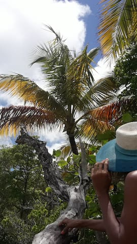 Les incontournables cocotiers
