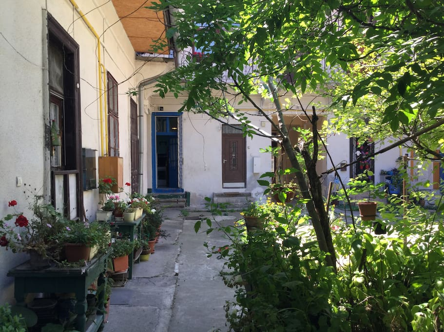 Welcoming yard with Fig Tree