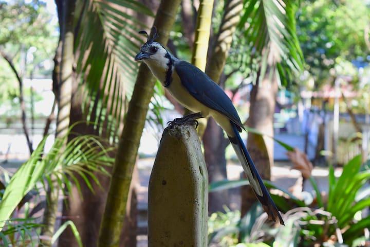 Wildlife around Hotel Aurora