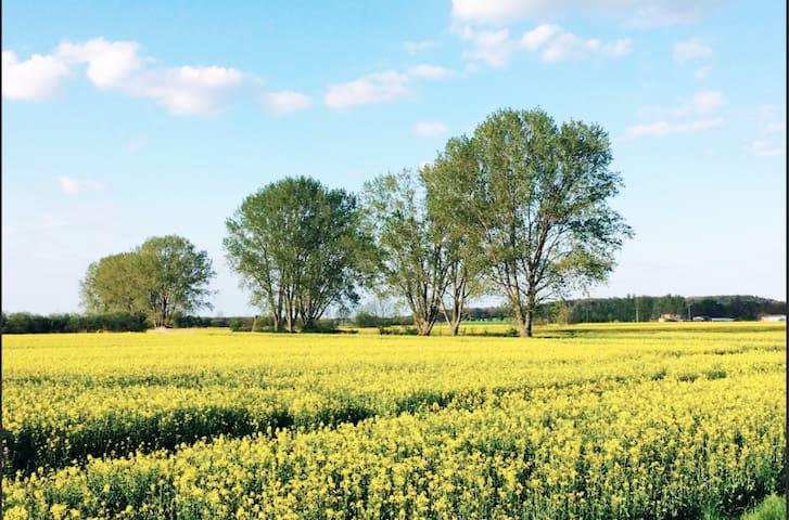 Garten Cottage Marille im zauberhaften Havelland