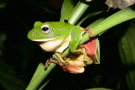 Frog Grandma's Home - Quad room - Puli Township