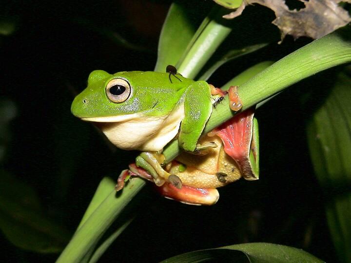 Frog Grandma's Home - Quad room