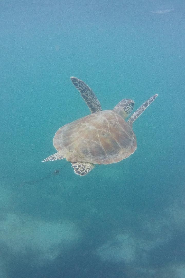 Little guy turtle