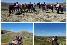 Vi tar dere med på rideturer i våre flotte fjell. Se Bekken gård for mer info.