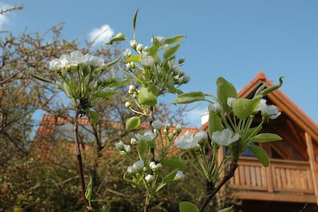 Haus mit Garten - Klausen-Leopoldsdorf