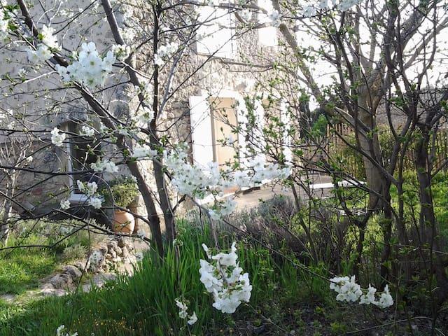 Parc du Luberon gite independant - Cabrières-d'Aigues - House