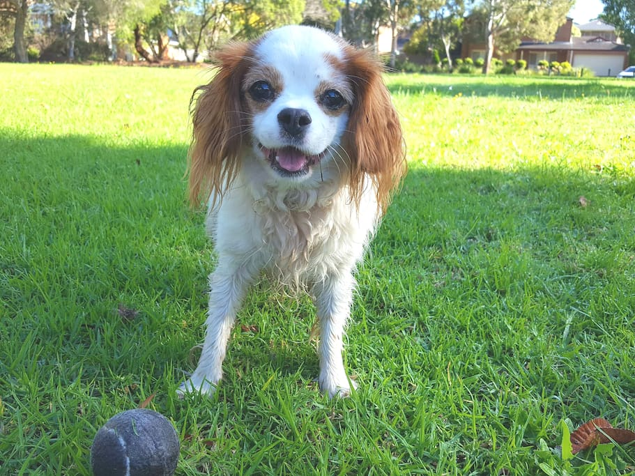 Jazzy, the friendly little house mascot! She loves tennis balls and having them thrown for her in the park opposite.