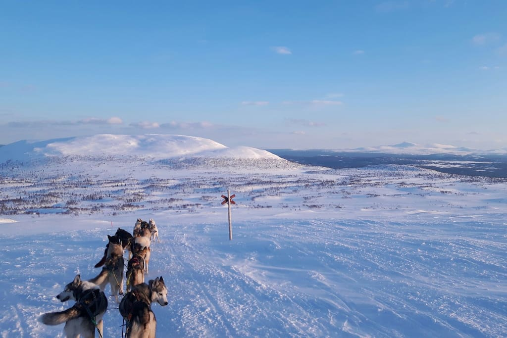 Sleddogs in south Lappland.