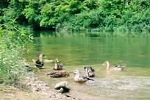 清澈的南江河