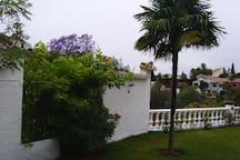 Garden, palmtree and the balustrade