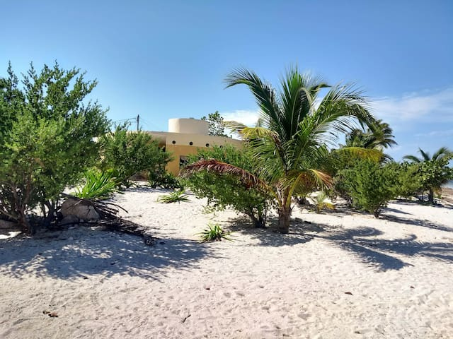 Conch Cottage/ FRONT BEACH