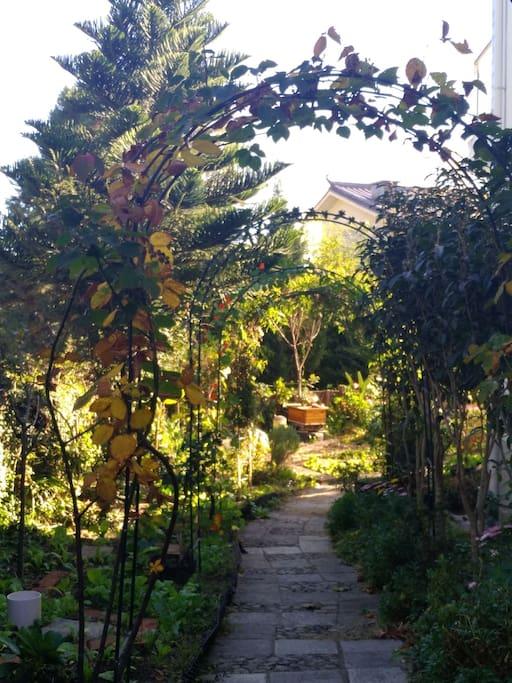 花园小径边的黑莓和时令有机蔬菜,有幸您也可以品尝。