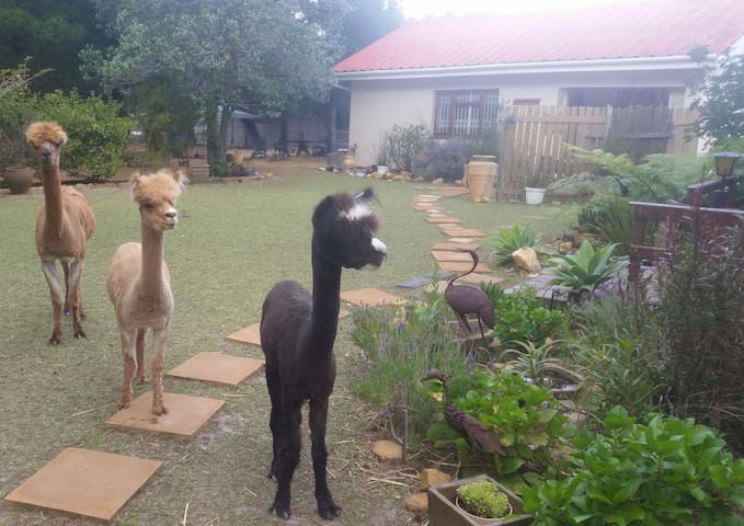 Alpaca Cottage