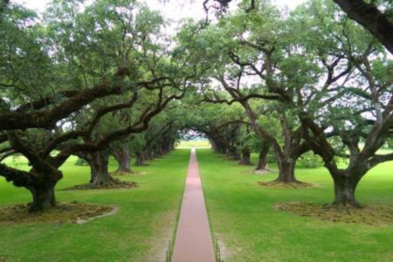 Local Attraction - Oak Alley Plantation