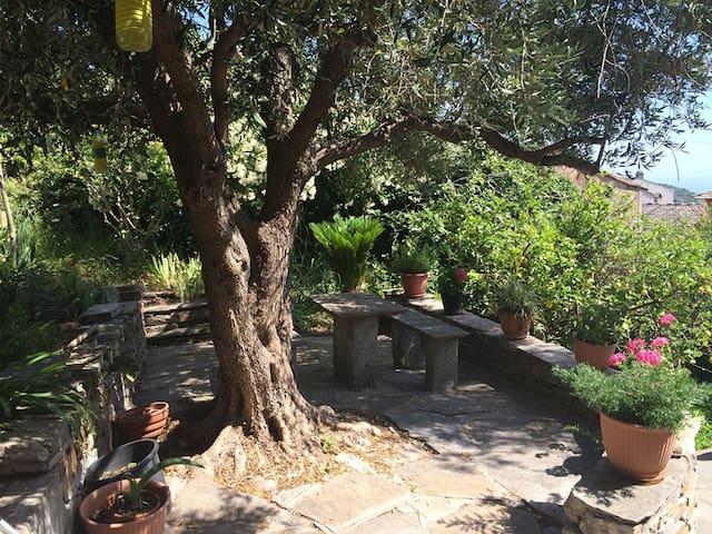 Location Cap Corse Villa Brando - Brando - Villa