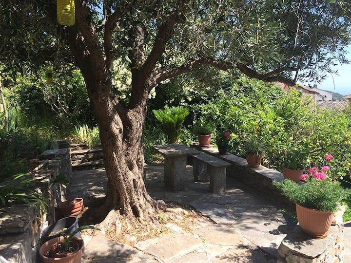 Location Cap Corse Villa Brando.