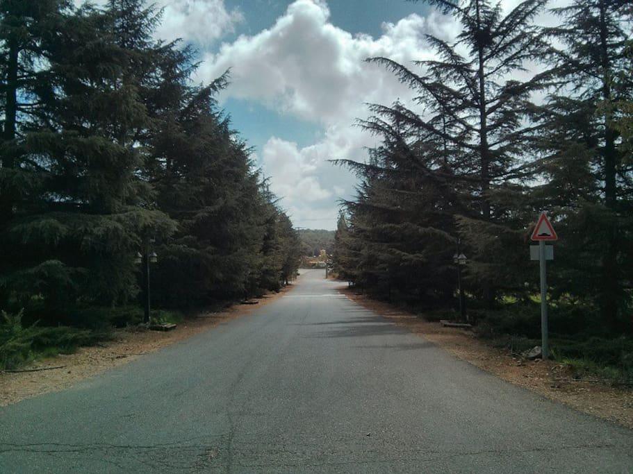 Odem's streets