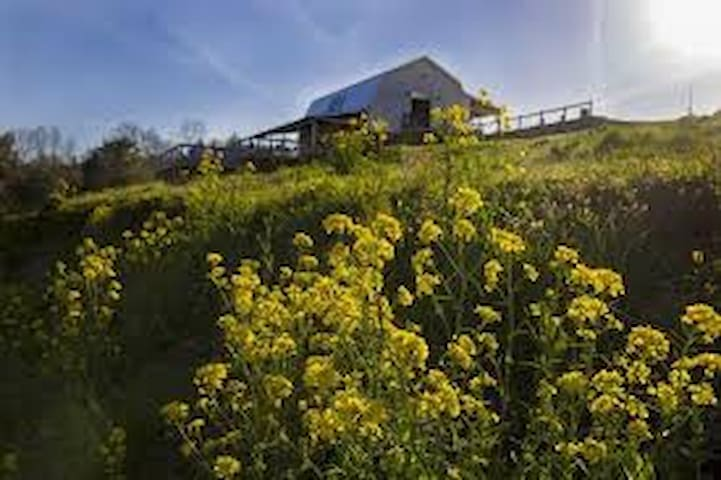 A Vineyard & Orchard Farmhouse Stay