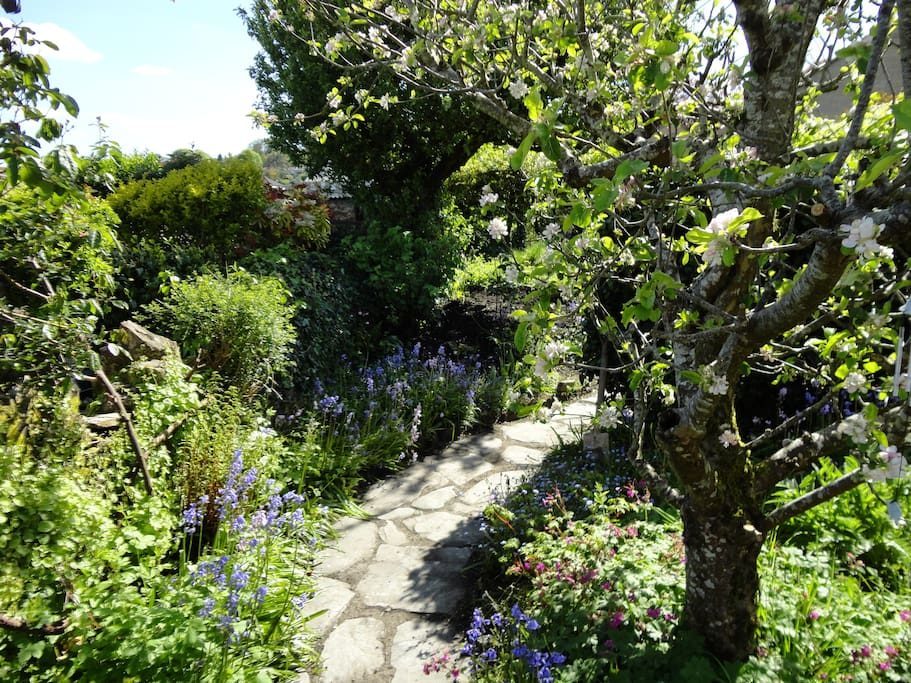 The garden just coming into flower