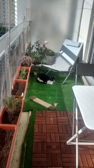 Le balcon - Chat non fourni !