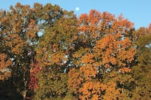 Our backyard.....in its Autumn glory.  Waterfront