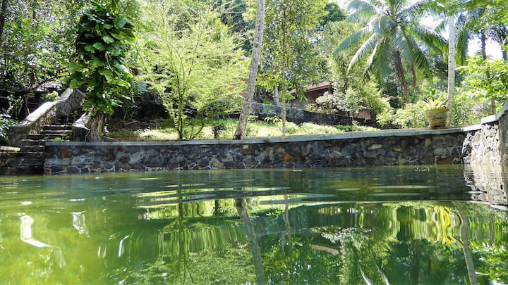 Nature experience in your bungalow with priv. pool