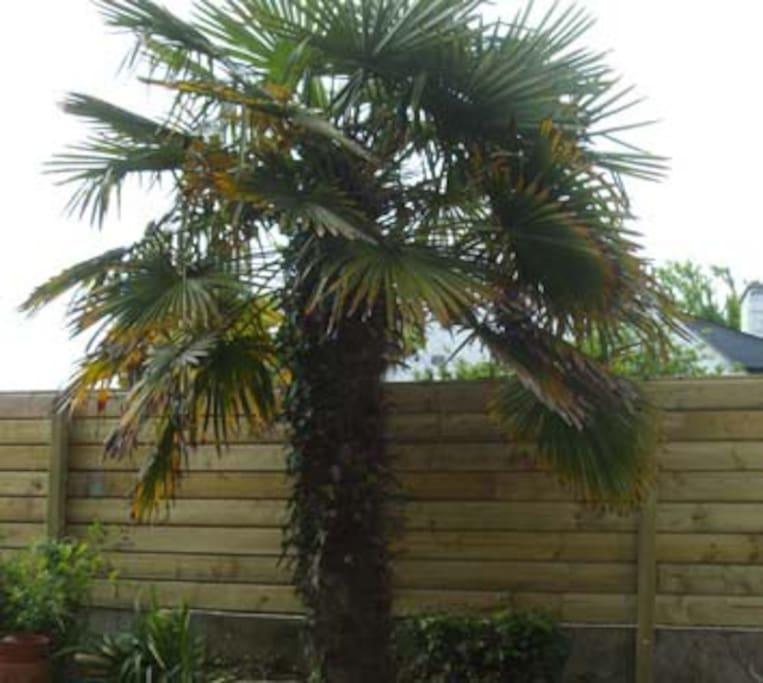2 palmiers dans le jardin