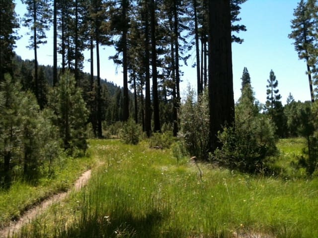 """Let your den be the forest"" - South Lake Tahoe - Wohnung"