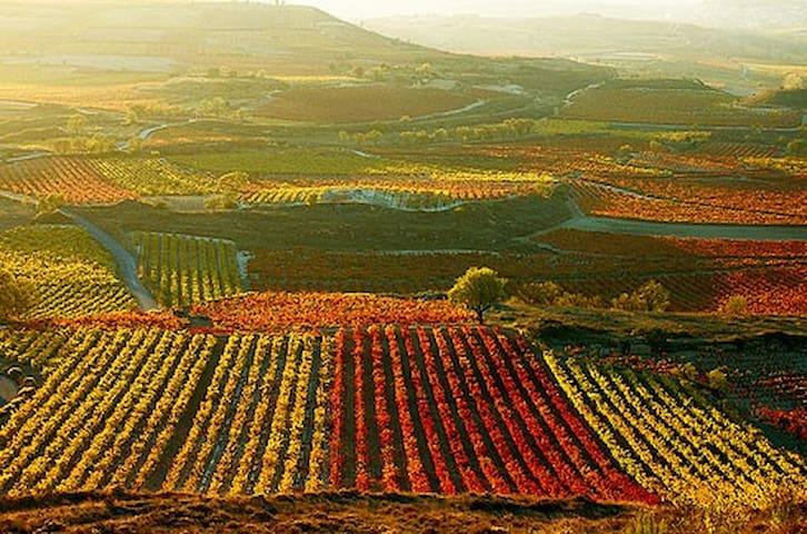 Viñedo Rioja Alavesa (90 min).