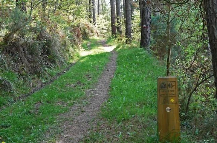 Camino de Liernia (5 min)