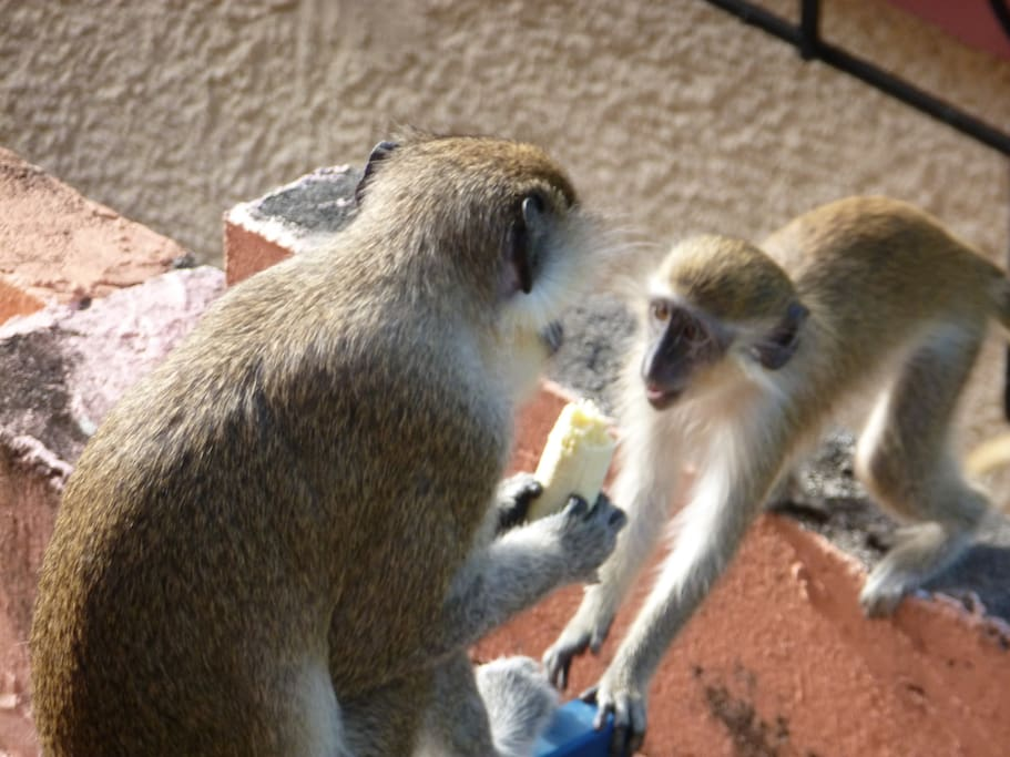 Mother monkey and baby on the wall