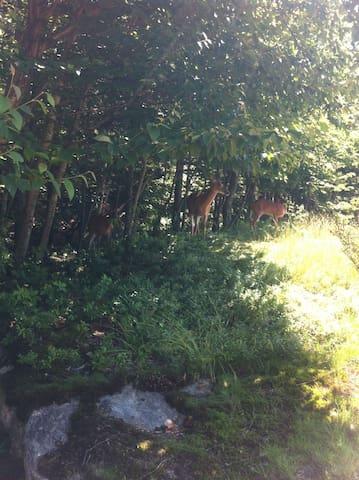 Chevreuils près du chalet