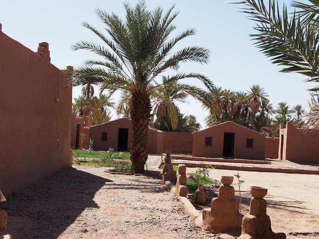 Desert Excursions /Camels Riding/Group Trekking